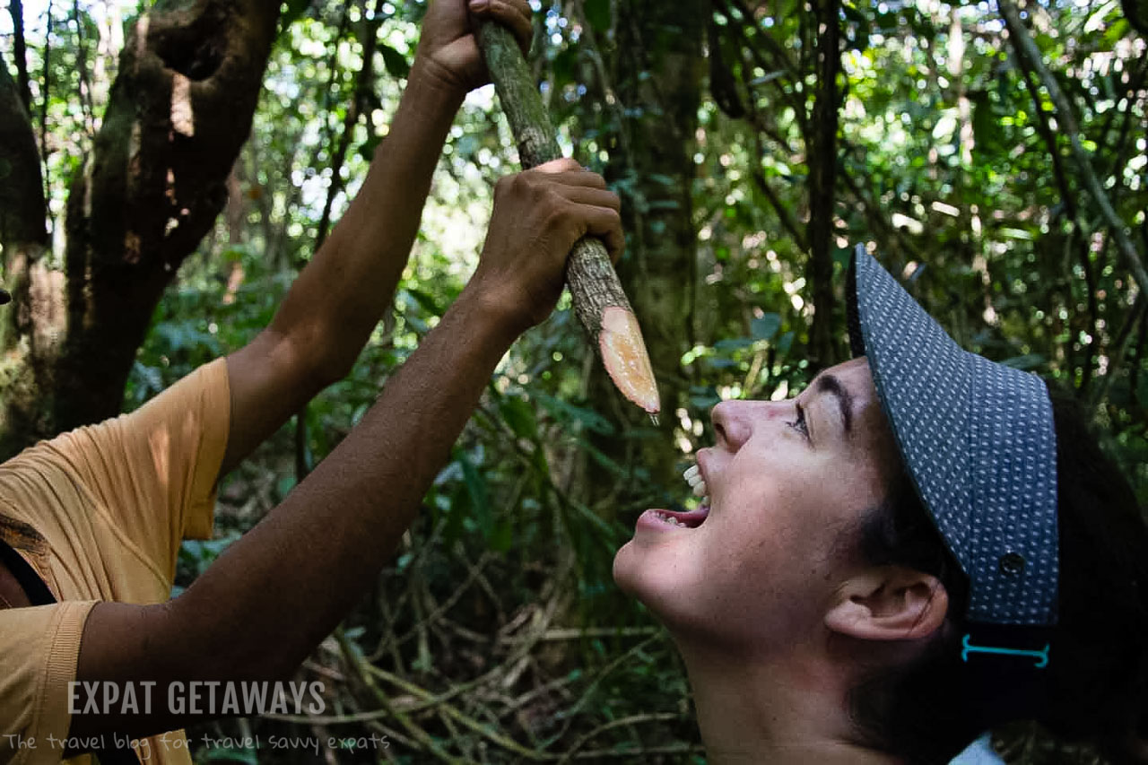 Jess learning how to find water in the jungle on a trek through the Cardamom Mountains.