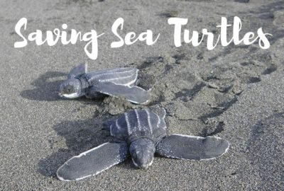 Saving Sea Turtles, Costa Rica and Sri Lanka.