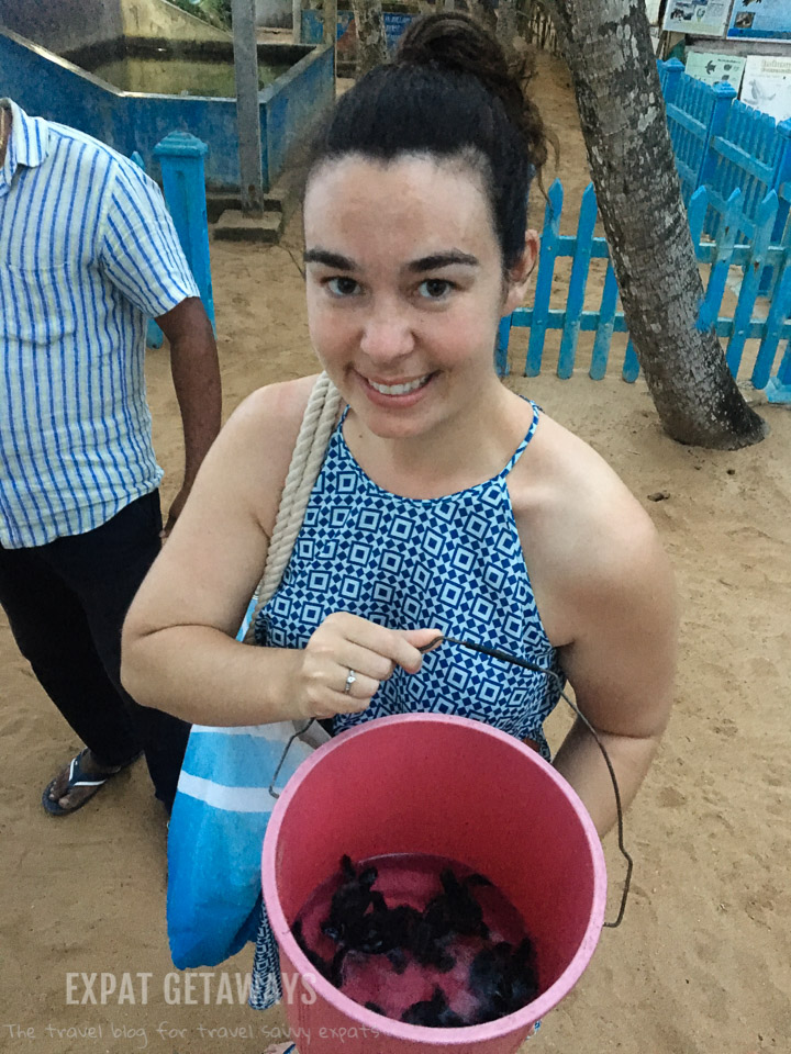 Jess was very excited with her bucket of sea turtles! Induruwa, Sri Lanka.