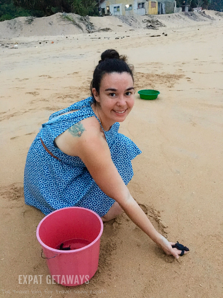 Jess releasing baby sea turtles in Sri Lanka.