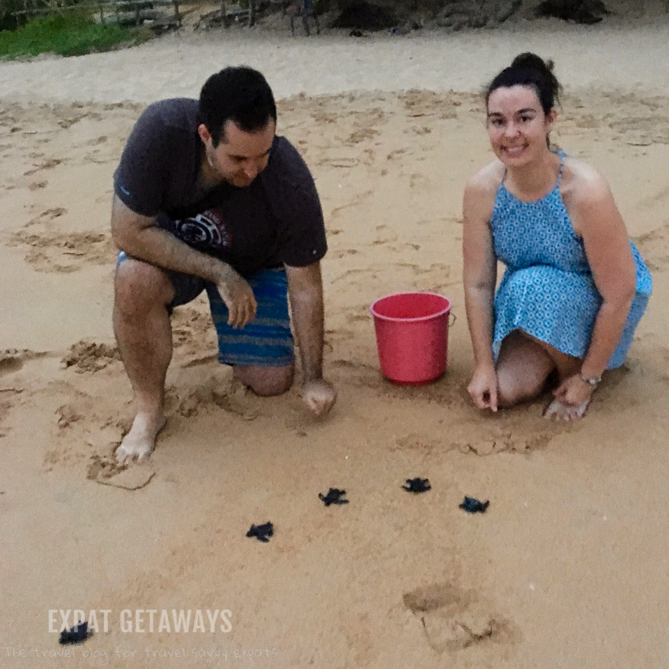 Jess and Andrew releasing baby green sea turtles into the ocean at Induruwa, Sri Lanka.