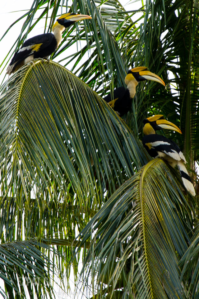 We got to hang out with the local wildlife everyday. The highlight was seeing giant hornbill birds around the Spa Village of Pangkor Laut Resort.