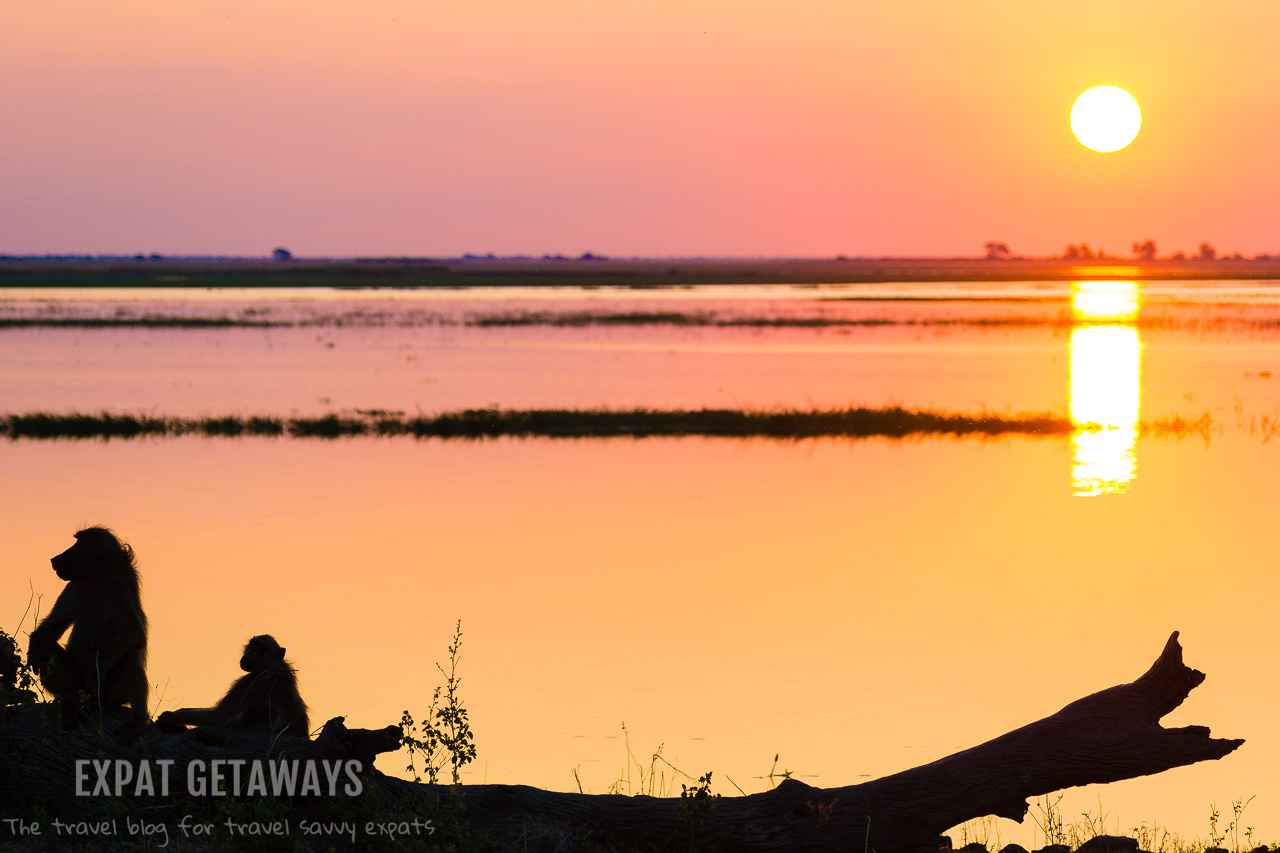 Botswana and Chobe National Park certainly know how to turn on a good sunset! Expat Getaways 2 Weeks Southern Africa.