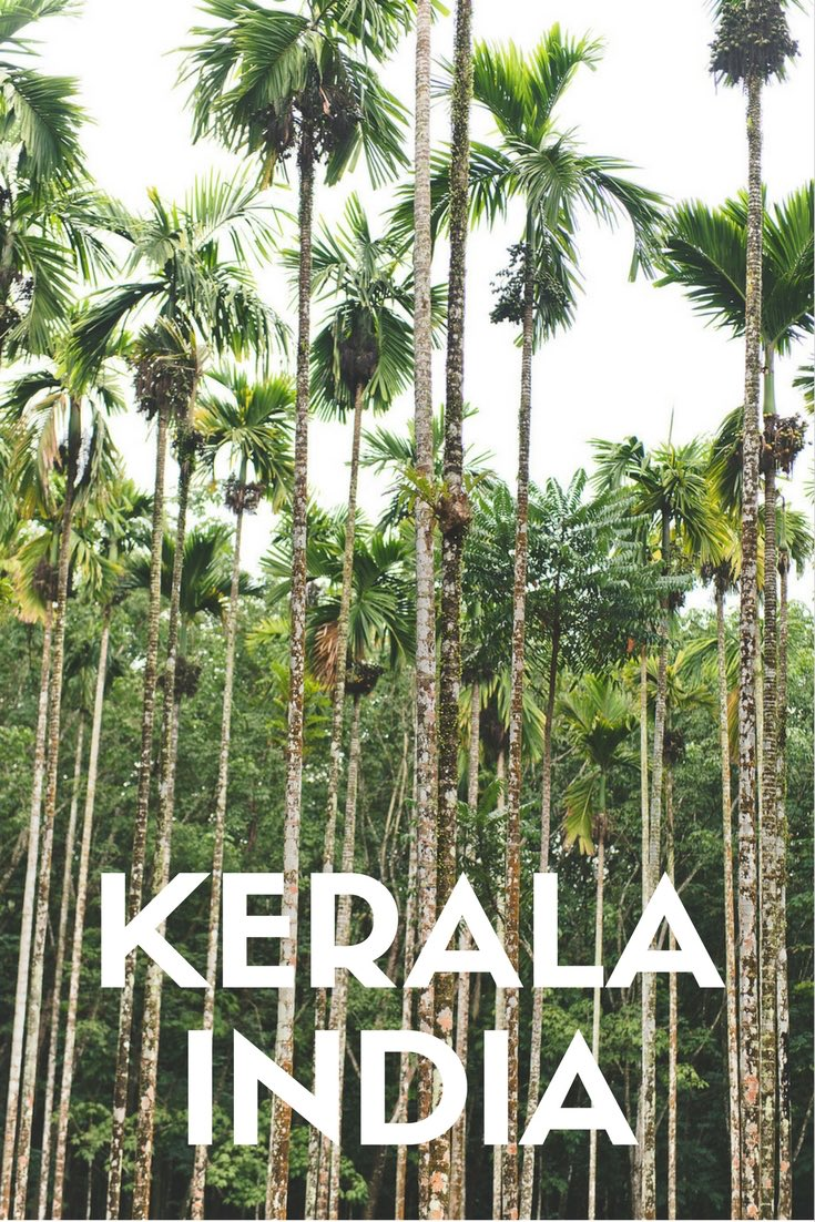 Palm trees, tropical beaches, exotic food and culture. It's time to explore Kerala India. Use Indian Summer House as your base for Kerala Accommodation. Expat Getaways - One Week in Kerala, India.