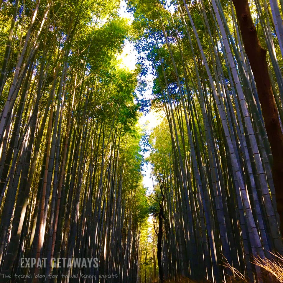 Exploring the bamboo forest outside Kyoto, Japan. Expat Getaways - Babymoon Destinations.